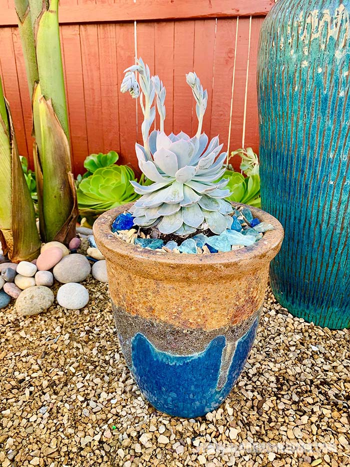 Flower Pot With Succulents
