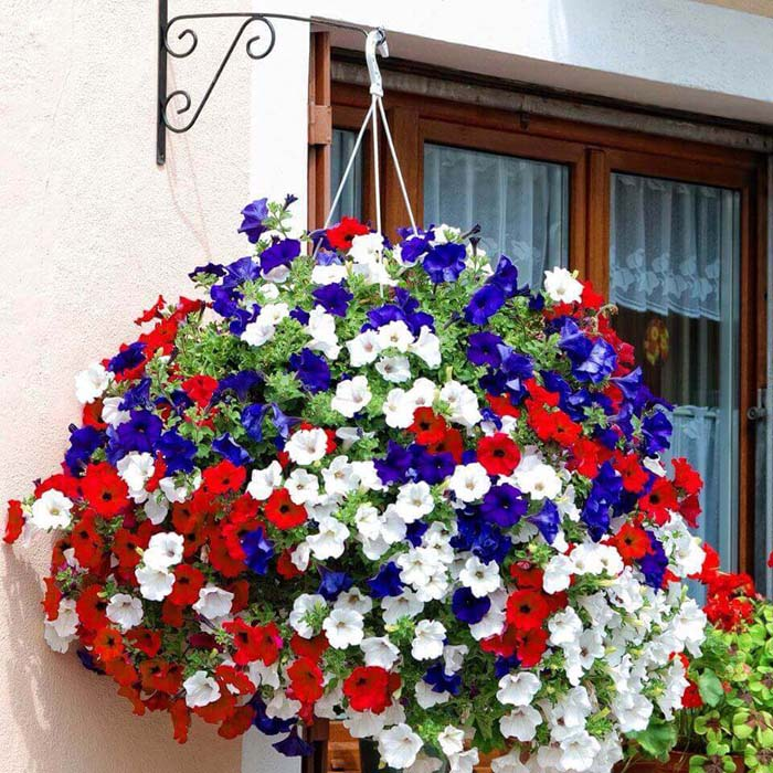 Fourth of July Themed Hanging Basket #diy #planter #flower #hanging #garden #decorhomeideas