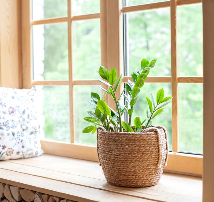 Zee Zee Plant #houseplant #grow #easy #decorhomeideas