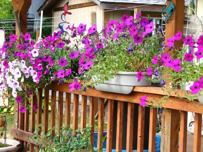 Railing Planters With Petunias #diy #planter #porch #decorhomeideas