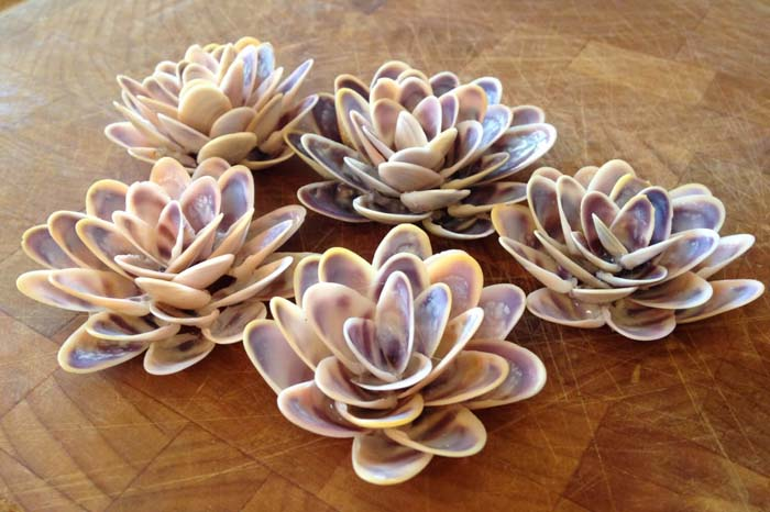 Succulents Made Of Seashells #diy #seashell #decor #decorhomeideas