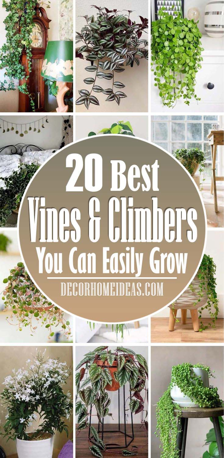 Best Indoor Vines And Climbing Plants. Indoor vine plants and climbing plants are great houseplants to bring nature into your home environment. The best indoor vine plants and climbers can be used in hanging baskets, trained to climb, or just put in a pot on a high shelf. #decorhomeideas