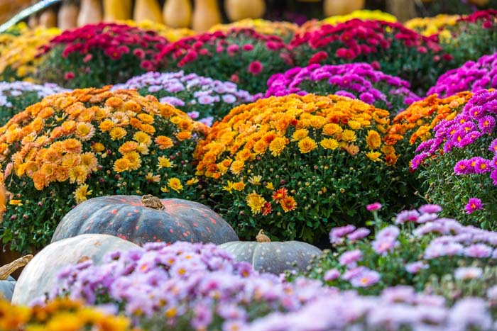 Colorful Rows of Blooms #fall #garden #decoration #decorhomeideas