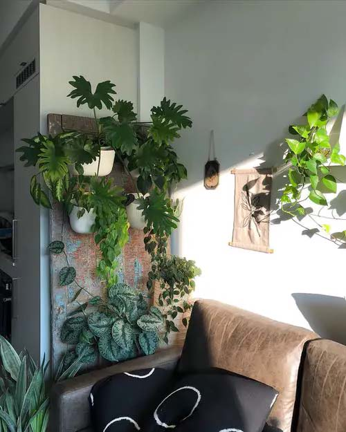 DIY Plant Wall #houseplant #wall #decor #decorhomeideas