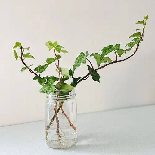 English Ivy #plant #indoor #vase #decorhomeideas