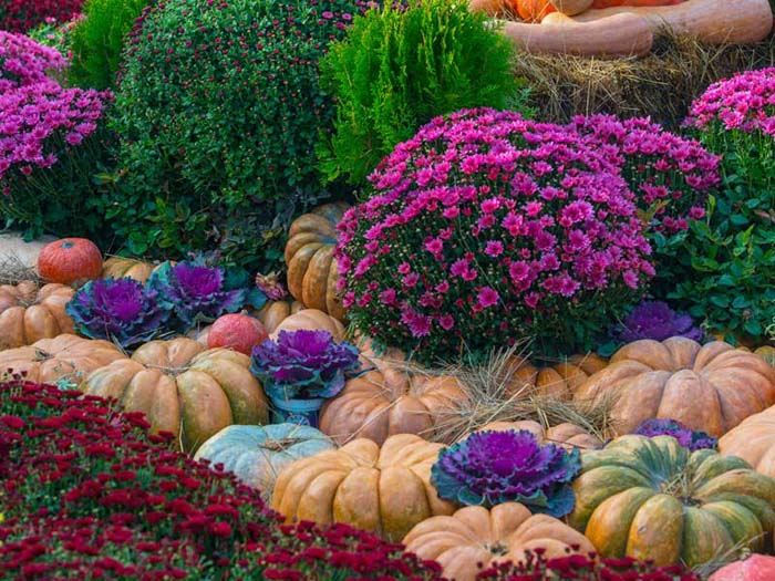 Fall Pumpkin Patch with Pink and Purple Blooms #fall #garden #decoration #decorhomeideas
