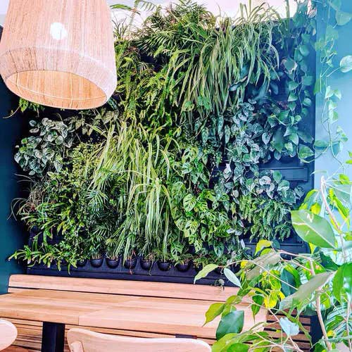 Lush Plant Wall #houseplant #wall #decor #decorhomeideas