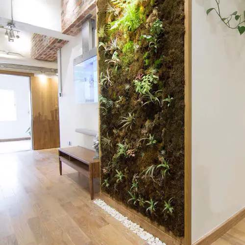 Moss and Plant Feature Wall #houseplant #wall #decor #decorhomeideas