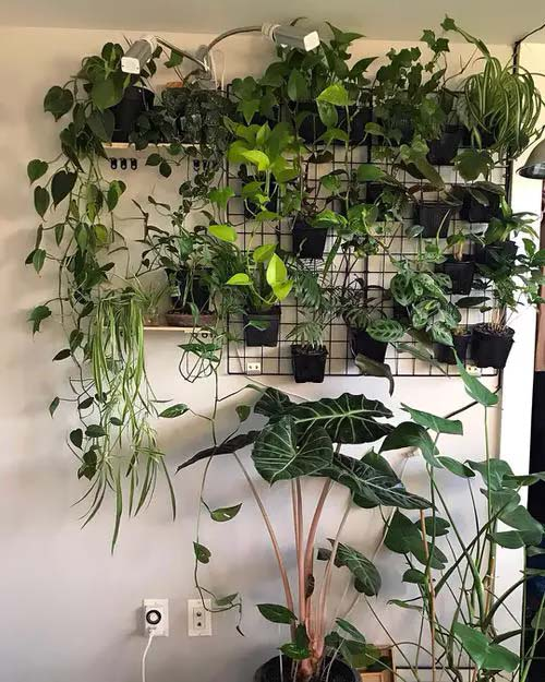 Plants on Grids and Shelves #houseplant #wall #decor #decorhomeideas