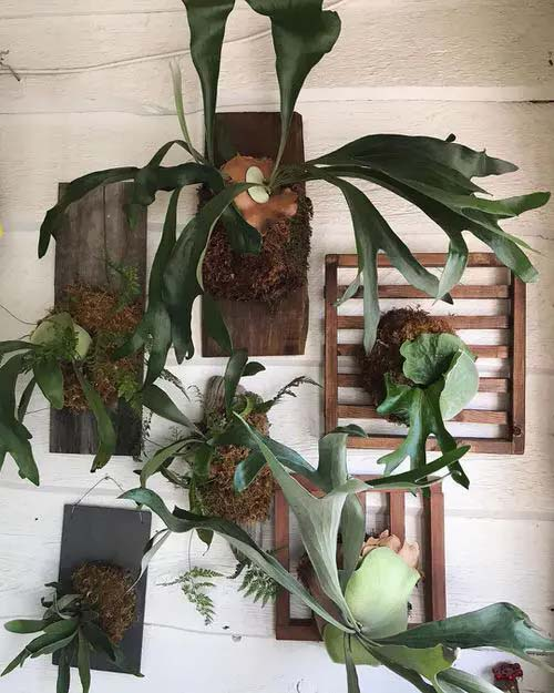 Plants on Wooden Pallets #houseplant #wall #decor #decorhomeideas