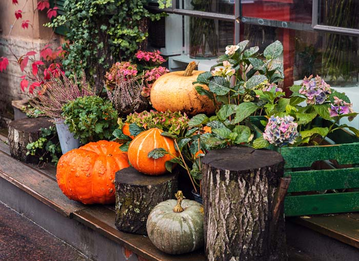 Pumpkins and Plants in Bright Colors #fall #garden #decoration #decorhomeideas