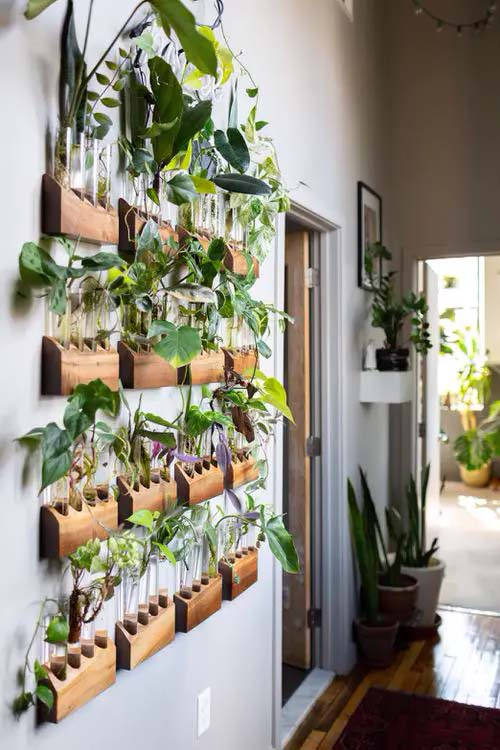 Test Tube Plants in Wooden Holders #houseplant #wall #decor #decorhomeideas