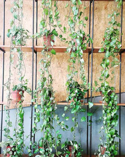 Vines Perched on Industrial Shelves #houseplant #wall #decor #decorhomeideas