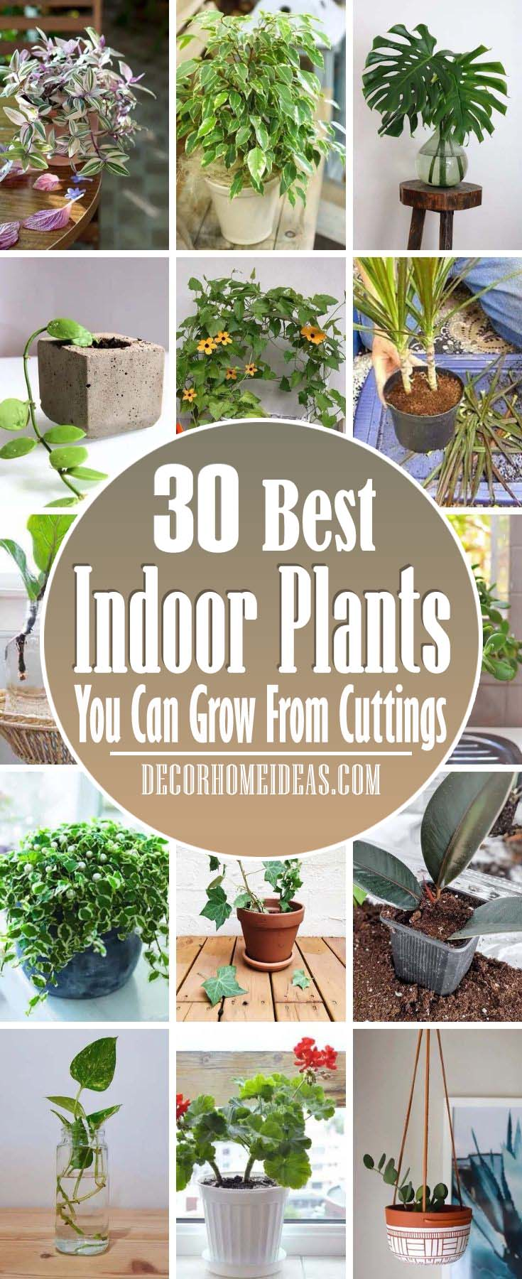 Best Indoor Plants From Cuttings. Indoor plants can be expensive but with some basic materials and know-how, you can grow them for free from simple cuttings. #decorhomeideas