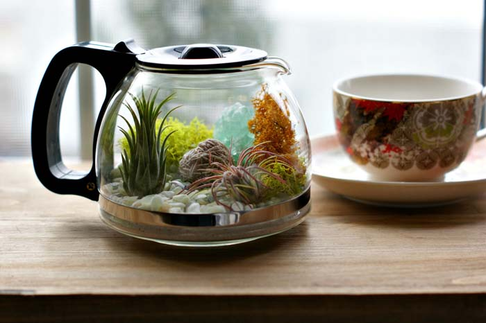 Coffee Pot Terrarium #planter #olditems #kitchen #decorhomeideas