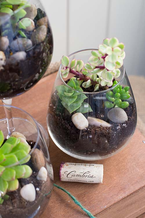 DIY Wine Glass Terrariums #planter #olditems #kitchen #decorhomeideas