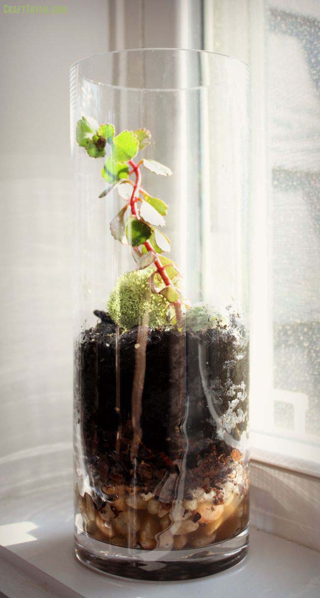 How to Make a Glass Terrarium #planter #olditems #kitchen #decorhomeideas