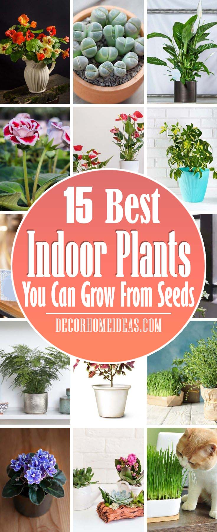 Best Indoor Plants You Can Grow From Seeds. Indoor gardening sounds like fun, but most of us have no idea where to start. We rounded up the best indoor plants to grow first, so you can get the hang of it all and develop a green thumb. It's not as hard as you think. #decorhomeideas