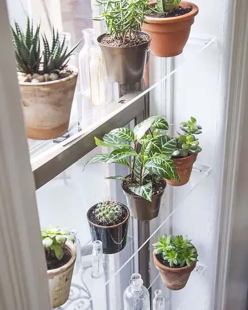 Transparent Shelves for Succulents #windowshelf #plants #decorhomeideas