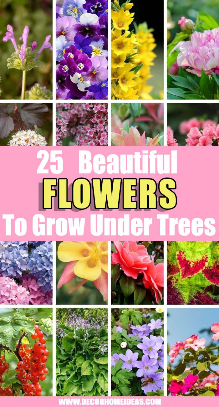 Best Flowers That Grow Well Under Trees. Spruce up your garden or backyard with one or all of these flowers to grow under trees! They bloom under shade and create beauty in your garden! #decorhomeideas