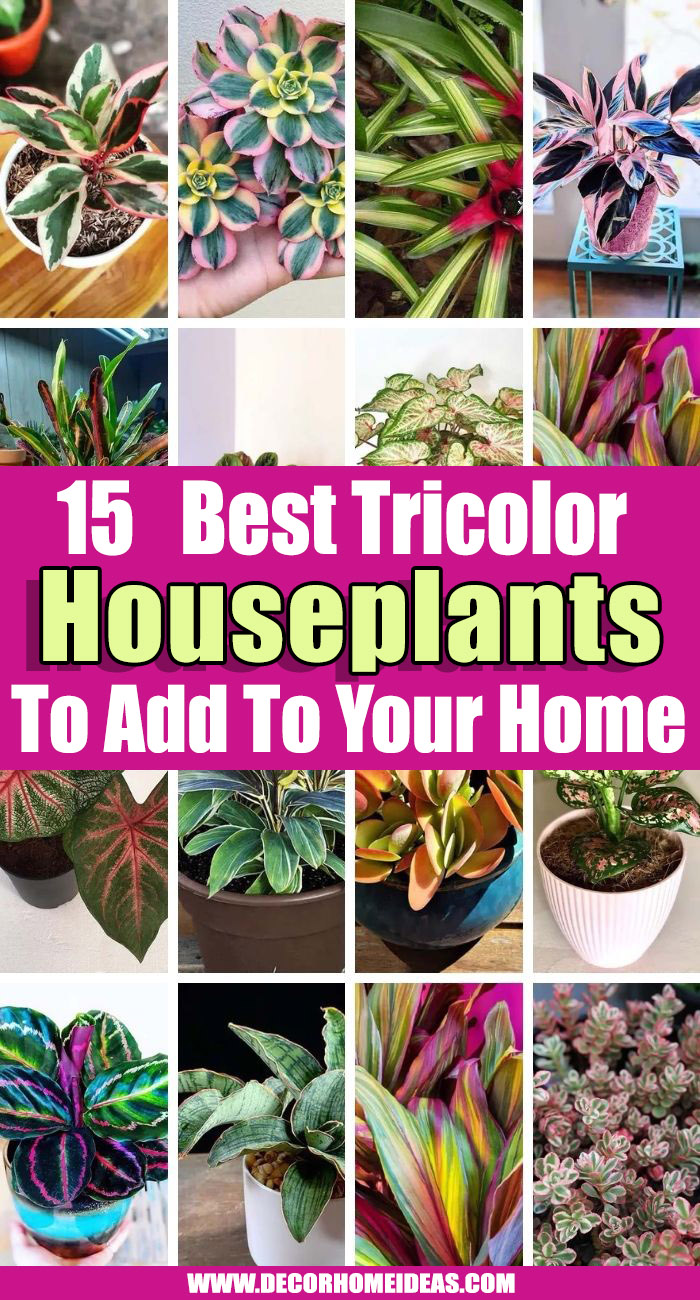 Best Tricolor Houseplants. If you like plants with colorful leaves, then we have some rare Tricolor Houseplants with a beautiful combination of three hues on the foliage #decorhomeideas