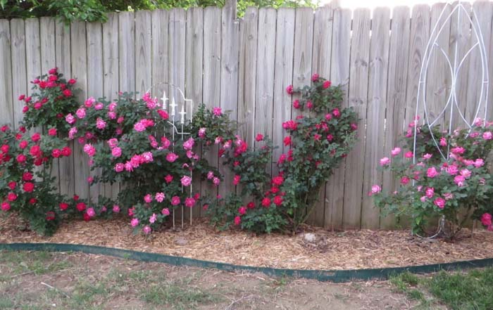 Doll Up Your Fence #rosegarden #roses #decorhomeideas
