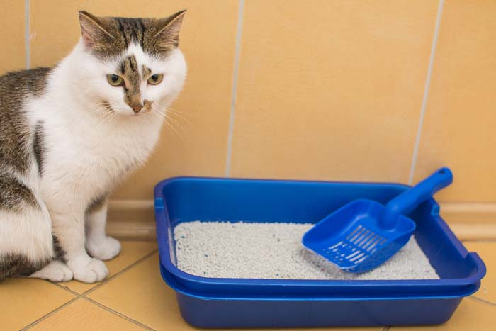 Kitty Litter #reusable #householditems #recycle #decorhomeideas