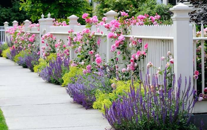 Pink Roses on a Picket Fence #rosegarden #roses #decorhomeideas