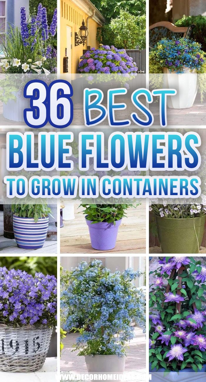 Best Blue Flowers To Grow In Containers. If you are in love with blue flowers, but not sure where to start, we have selected the best blue flowers to grow in containers. #decorhomeideas