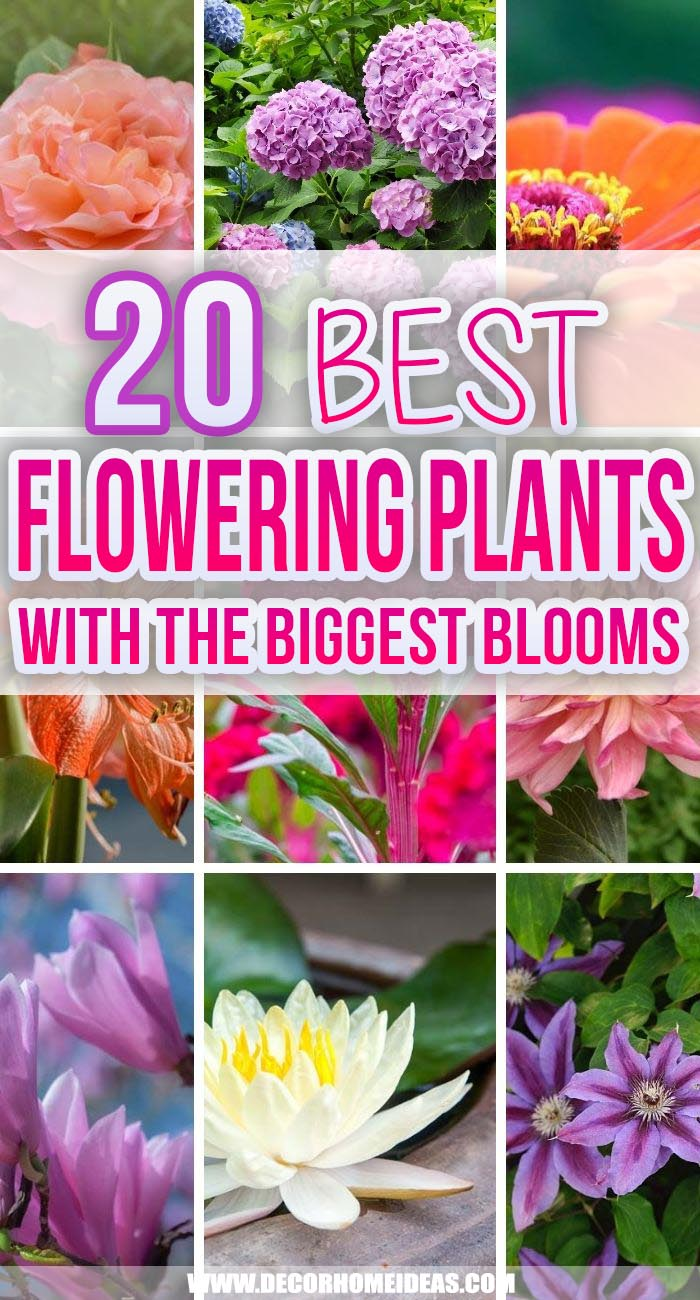 Best Flowering Plants With Biggest Blooms. These are some appealing giant flowers you can grow in your landscape, which will create a dramatic landscape statement as well as quickly fill up flower vases with cut flowers. #decorhomeideas