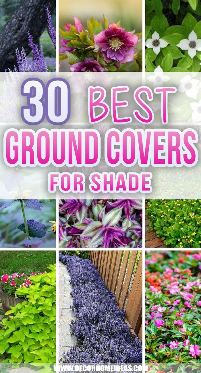 Best Ground Covers For Shade. Planting under a shady spot in your garden can be tough, but these 30 ground covers for shade stand the test of time and shadow! Get some ideas on what to grow in these tricky locations. #decorhomeideas