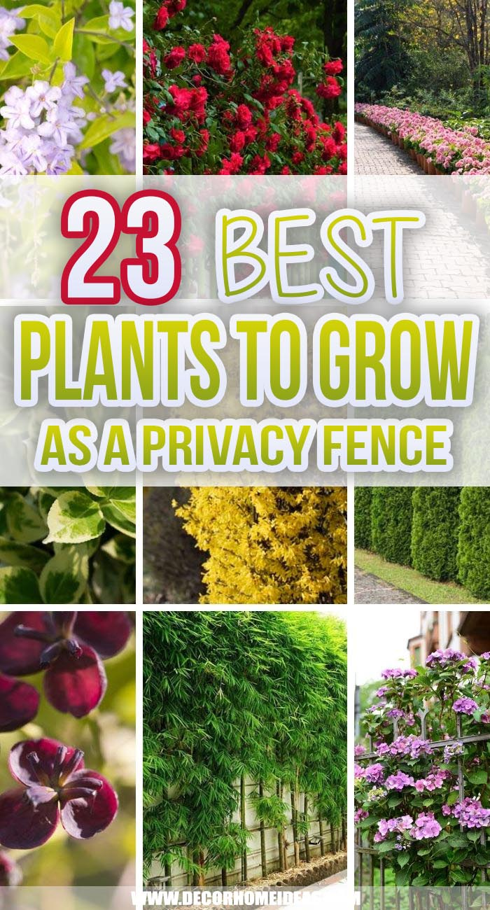Best Plants You Can Grow As Privacy Fence. Grow your own privacy fence with these gorgeous plants that will also add a natural look to your fencing. Add some lush green to your garden border. #decorhomeideas
