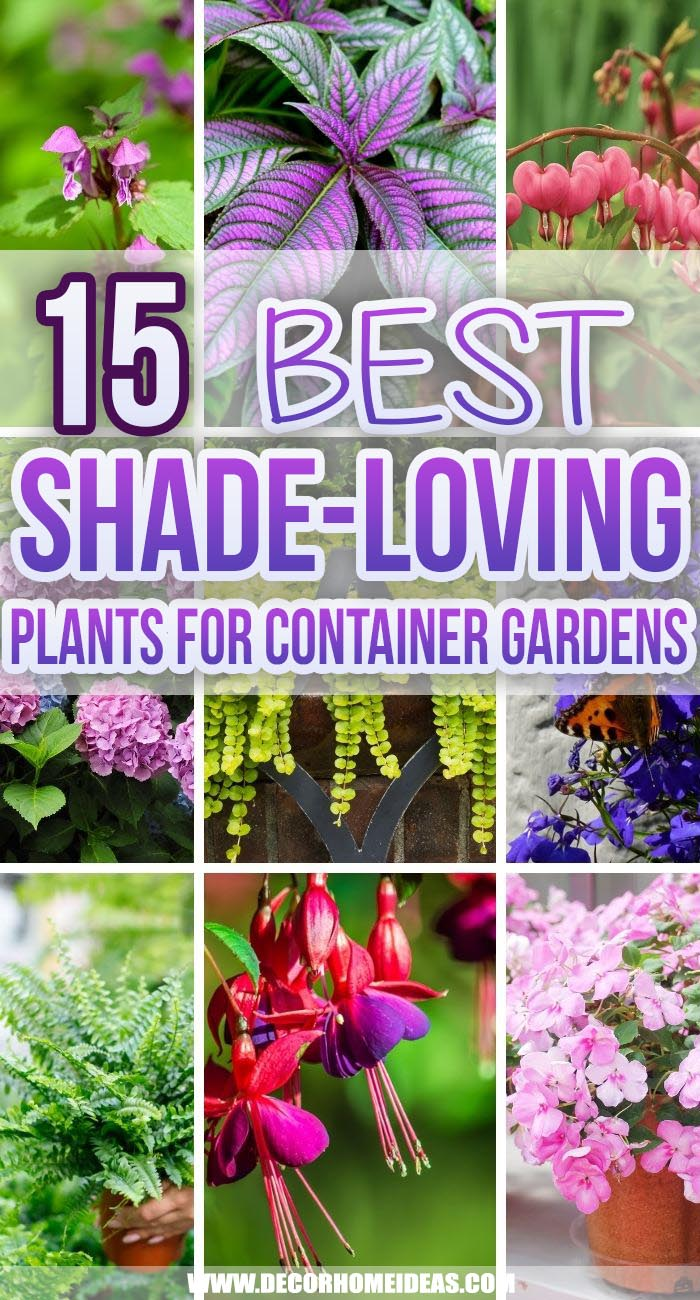 Best Shade Loving Plants Container Garden. Both annual and perennial plants can work in containers. These plants can thrive in container gardens in shady areas of your garden, backyard, porch or patio. #decorhomeideas