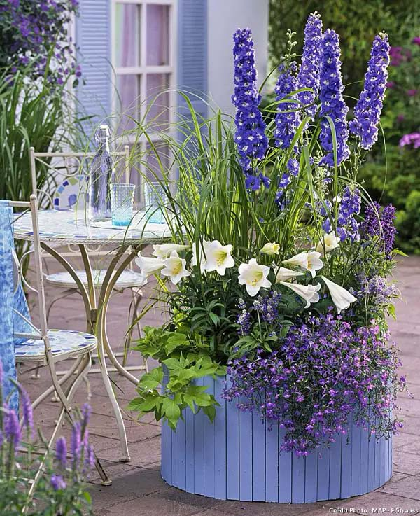 Delphinium-To-Grow-In-Container #blueflowers #gardencontainers #decorhomeideas