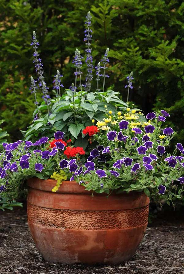 Petunia-To-Grow-In-Container #blueflowers #gardencontainers #decorhomeideas