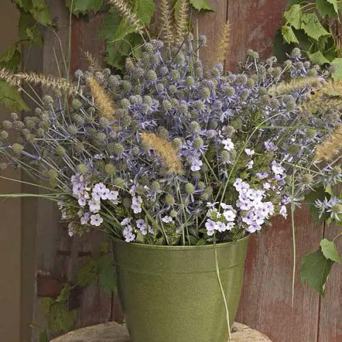 Sea Holly-To-Grow-In-Container #blueflowers #gardencontainers #decorhomeideas