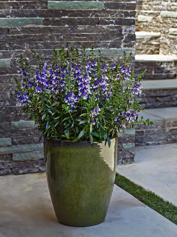 Summer Snapdragon-To-Grow-In-Container #blueflowers #gardencontainers #decorhomeideas