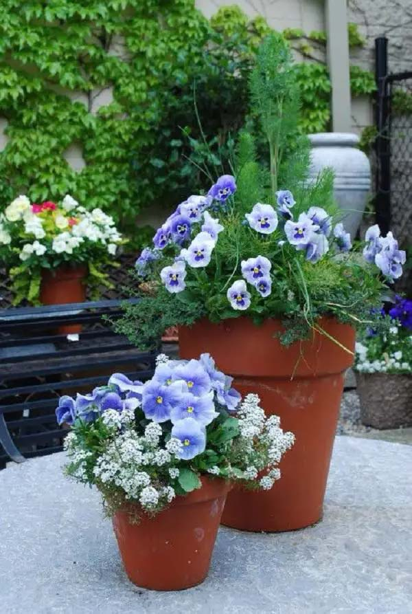 Viola/Pansy-To-Grow-In-Container #blueflowers #gardencontainers #decorhomeideas