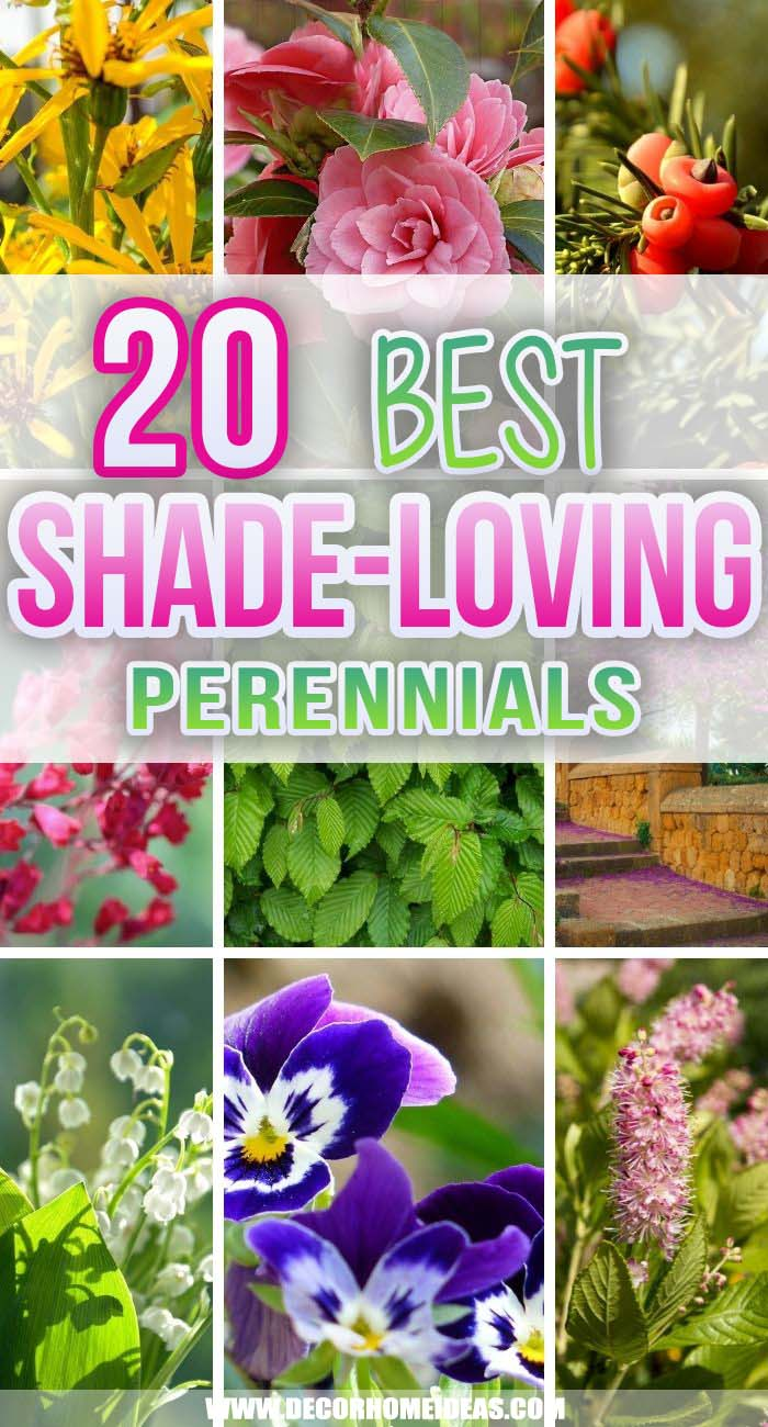Best Shade Loving Perennials. Is your backyard lacking any sunlight? Well, these shade-loving perennials could turn it into a beautiful and charming garden where you can spend summer days. #decorhomeideas