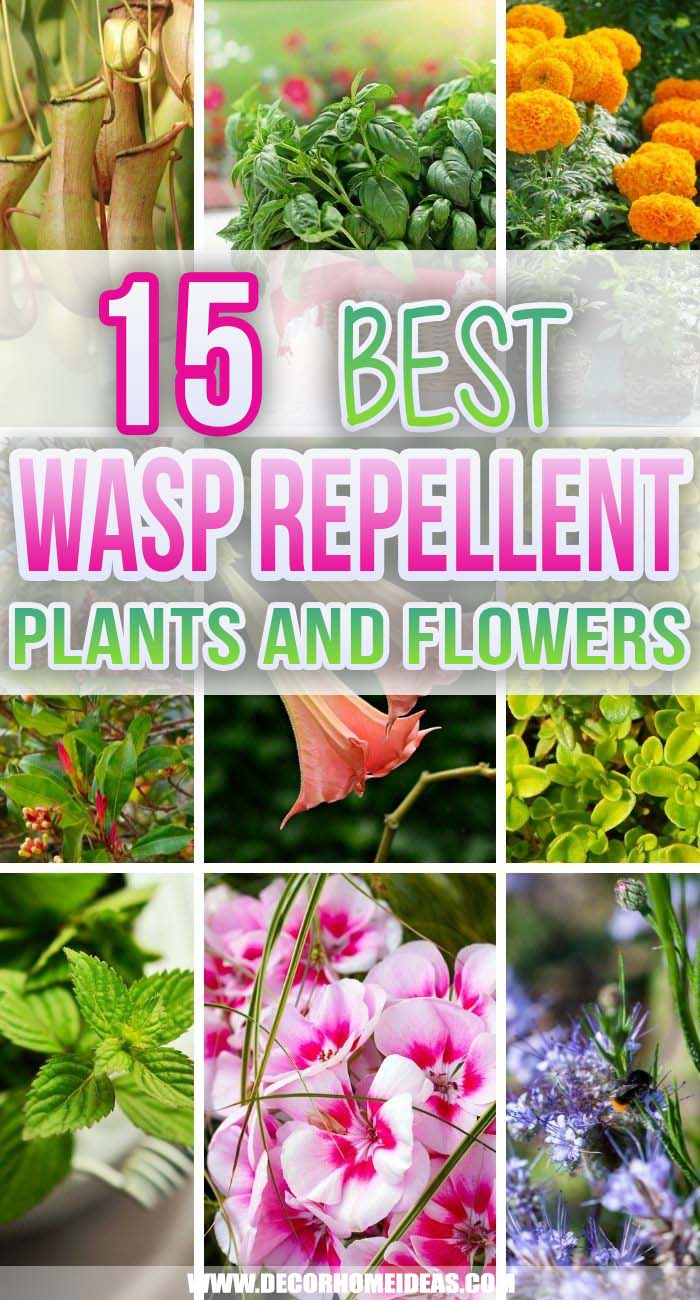 Best Wasp Repellent Plants. These are the best wasp repellent plants to include in your landscaping that are gorgeous and also keep those nasty wasps away without toxic chemicals.   #decorhomeideas
