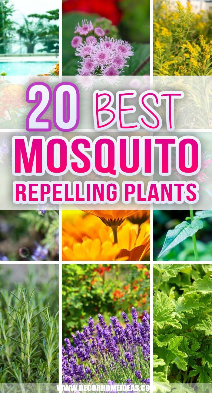 Best Mosquito Repelling Plants. Want to enjoy more time outdoors without being constantly bit by mosquitos? These plants will naturally repel mosquitos and you can grow them in your garden or on your patio. #decorhomeideas