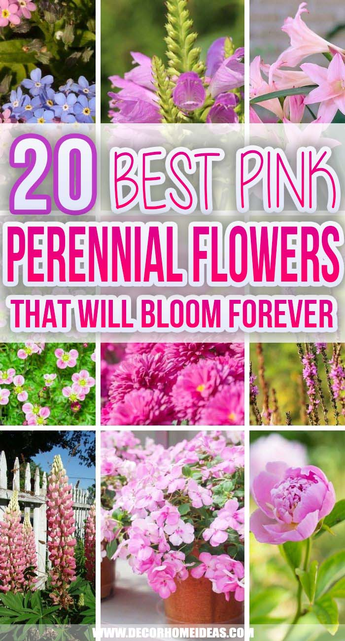 Best Pink Perennial Flowers. Plant these beautiful pink perennials once and enjoy a beautiful garden of perennials throughout the season with divine fragrance all around you. #decorhomeideas