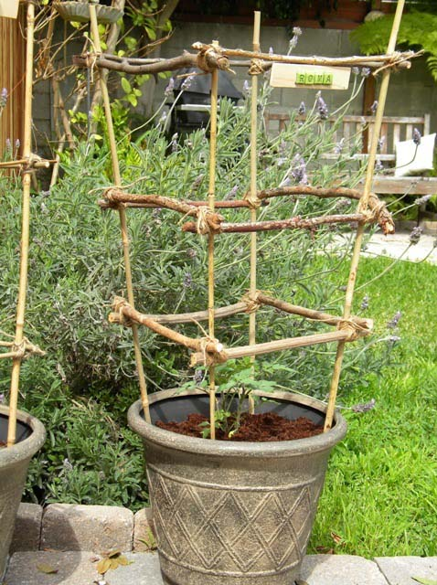 Stick and Bamboo DIY Tomato Cages #plantsupport #tomatocage #decorhomeideas