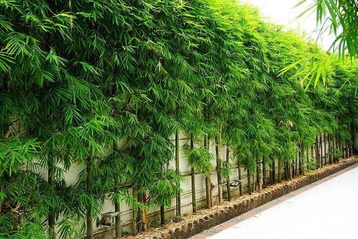 Bamboo Cheap Fence