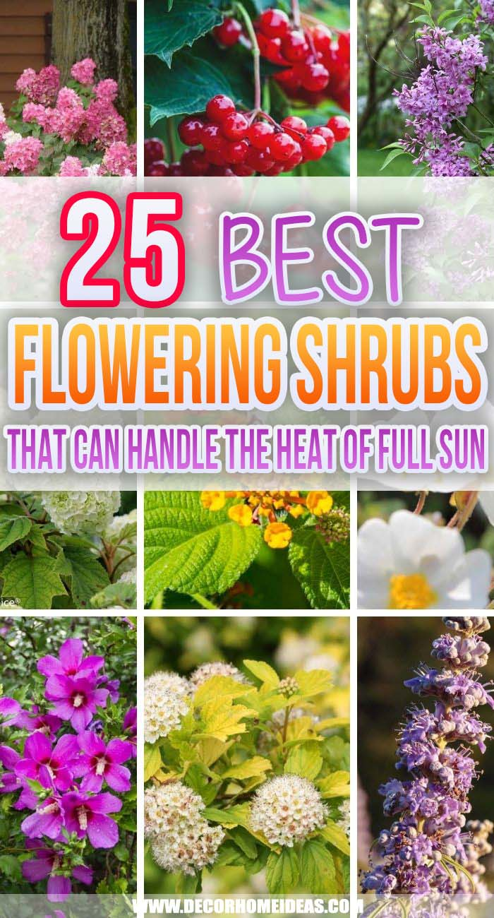Best Flowering Shrubs For Full Sun. Are you looking for easy-growing flowering shrubs for full sun that will make your garden more beautiful and will fill those sunny spots? These are the best shrubs that thrive in the heat. #decorhomeideas