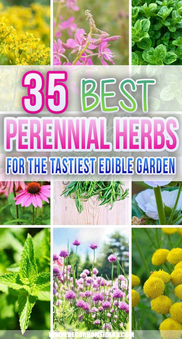 Best Perennial Herbs. Herb gardening is a fantastic gateway into gardening for those who are new to growing their own. Perennial herbs are easy to grow and would last longer. #decorhomeideas