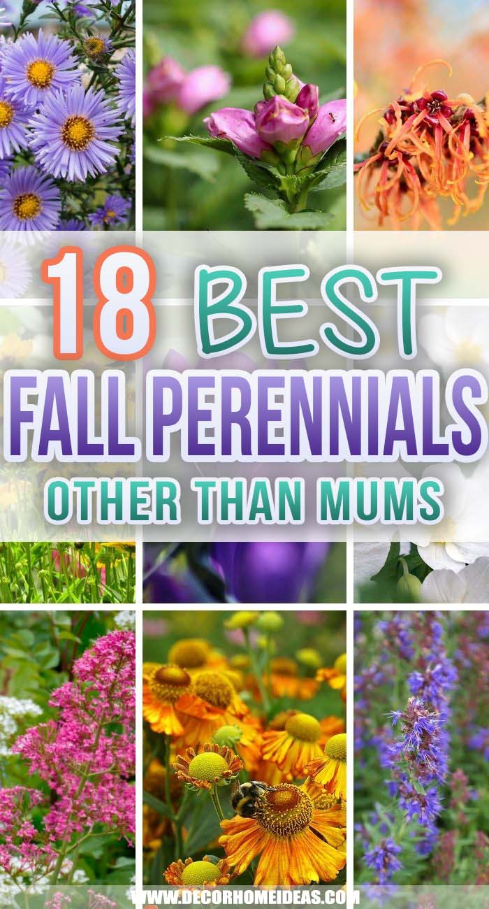 Best Fall Perennials. Don't let go of the summer too soon. These fantastic fall perennials will bloom throughout the autumn and add beautiful colors to your garden or backyard. #decorhomeideas