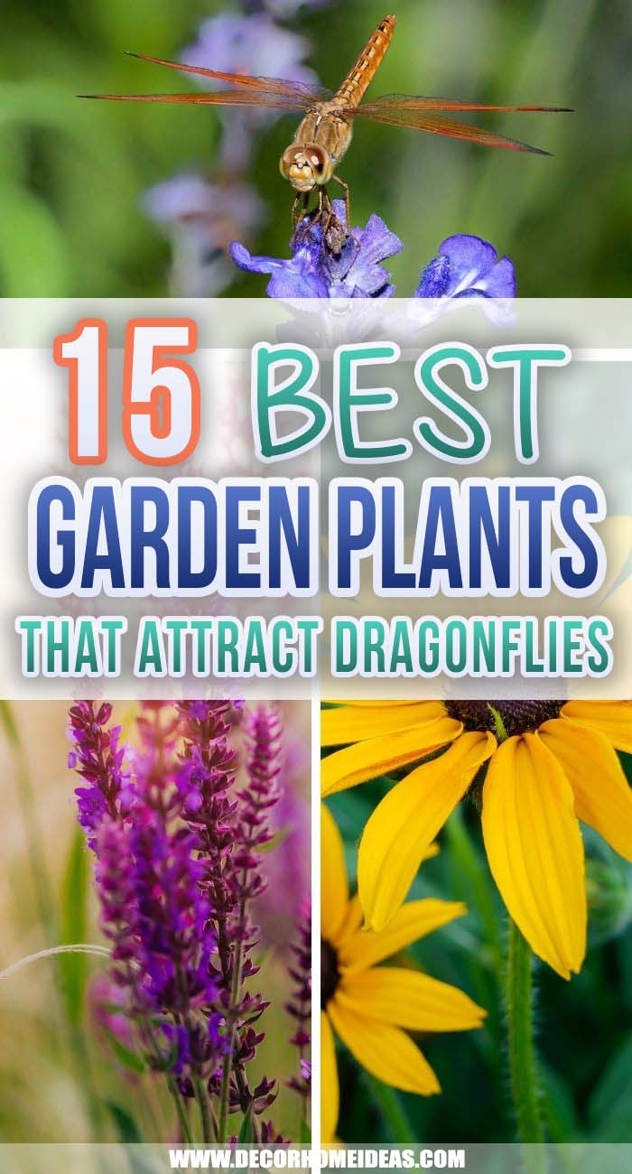 Best Plants That Attract Dragonflies. Welcoming dragonflies into your garden can help reduce a pesky mosquito population. Check out the best plants that attract dragonflies and add them to your backyard. #decorhomeideas