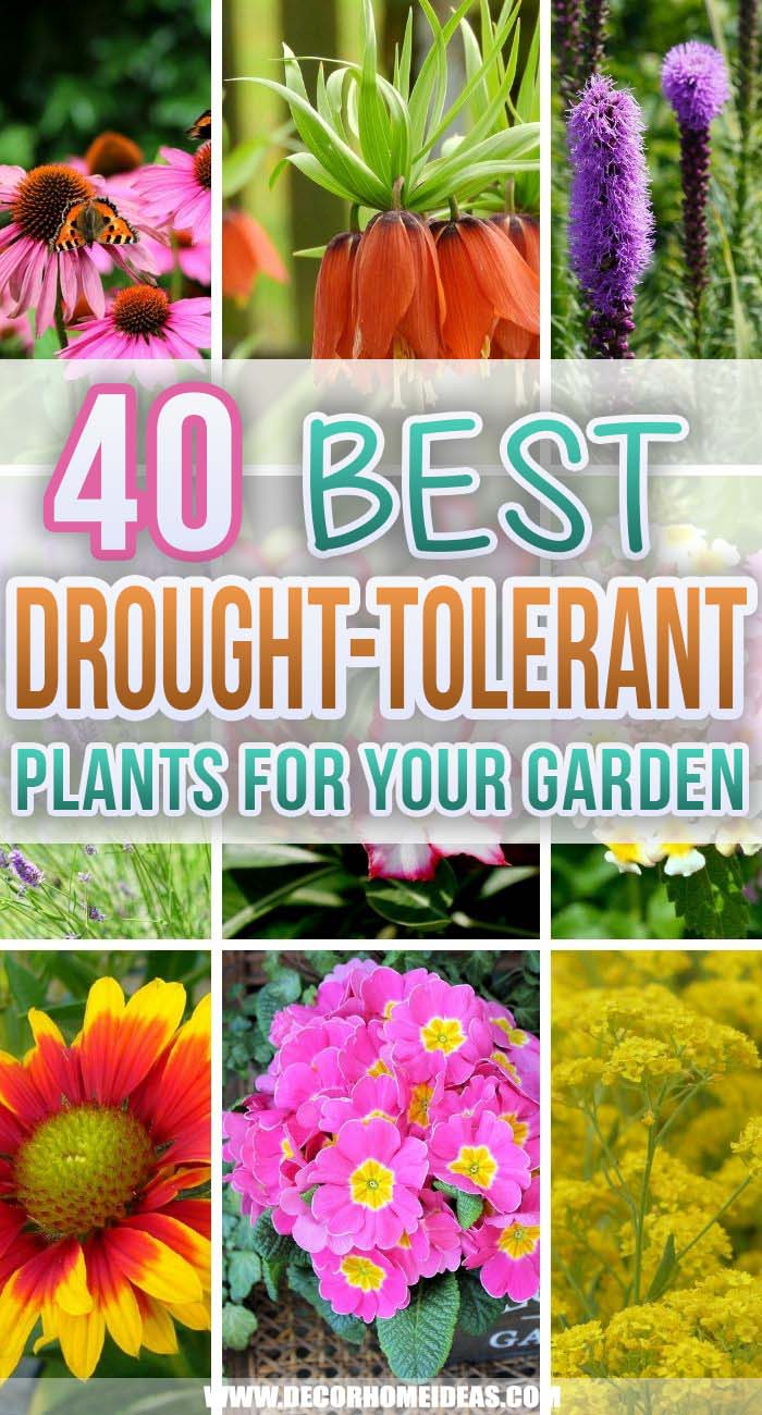 Best Drought Tolerant Plants. Looking for drought-tolerant plants for your backyard garden or arid landscape? Look no further because you might find what you're looking for on this roundup! #decorhomeideas