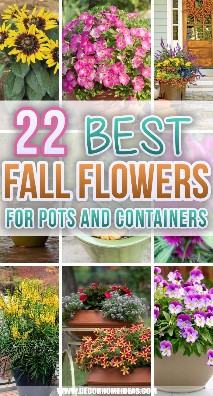 Best Fall Flowers For Pots. Spruce up your porch or patio with the best fall flowers for pots. Choose from container-friendly plants like mums, marigolds, impatiens, and asters. #decorhomeideas